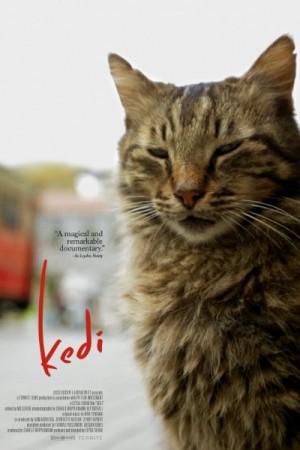 Watch Kedi Online
